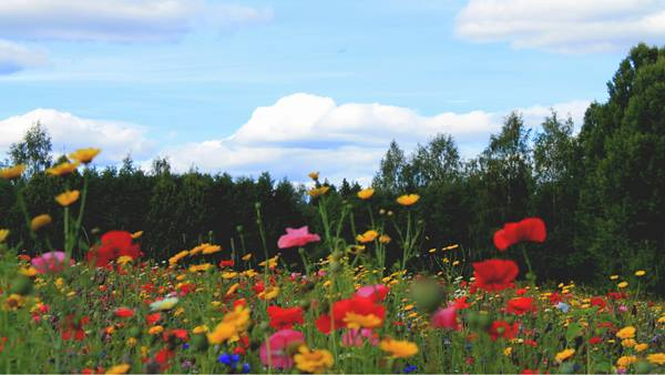 Photo from a Finnish university campus. Ramboll is helping University Properties of Finland to enhance biodiversity at twenty campuses